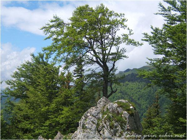 Muntele Rosu