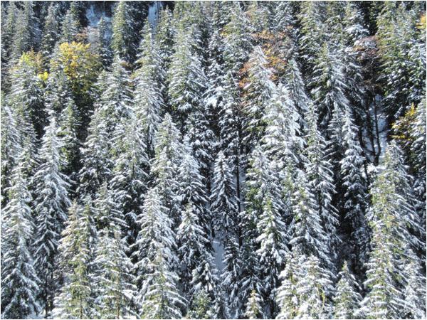 Iarna in Fagaras