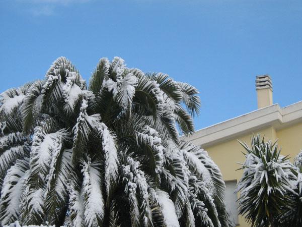 Palmieri, Andras Kerekes